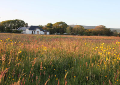The Barna Way Meadow View