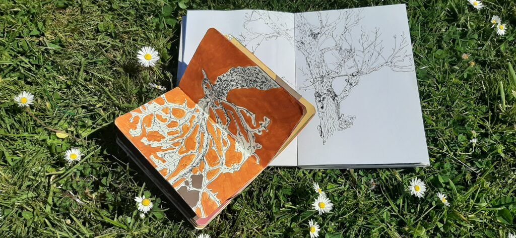 Creating your own nature journal for Biodiversity Week