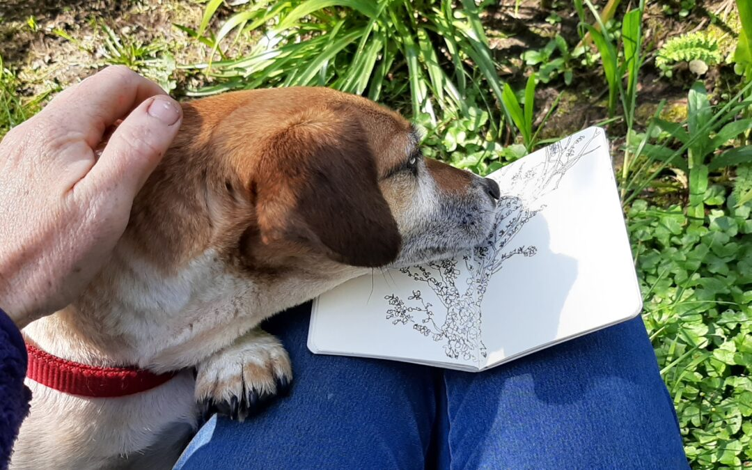 Developing your nature journal